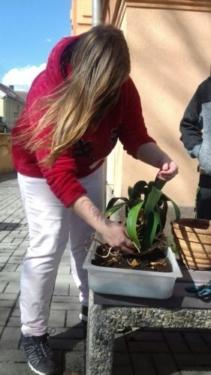 Euroinstitut | zahradnictví